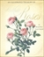 An Illustrated Treasury of Redouté Roses