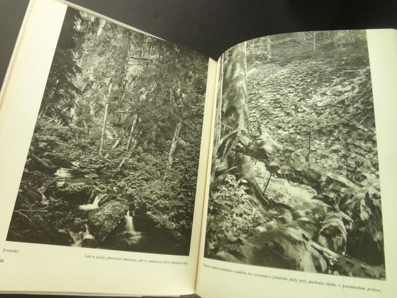 Nase pralesy (Naše pralesy)2