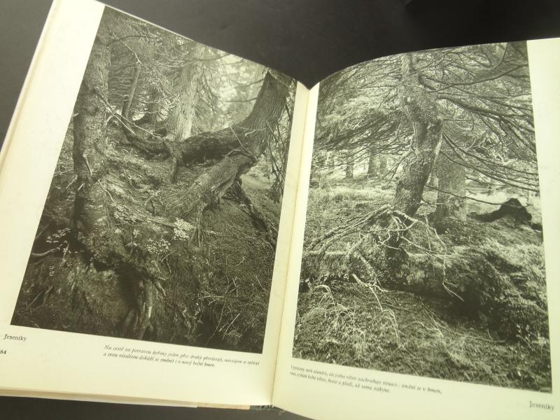 Nase pralesy (Naše pralesy)4