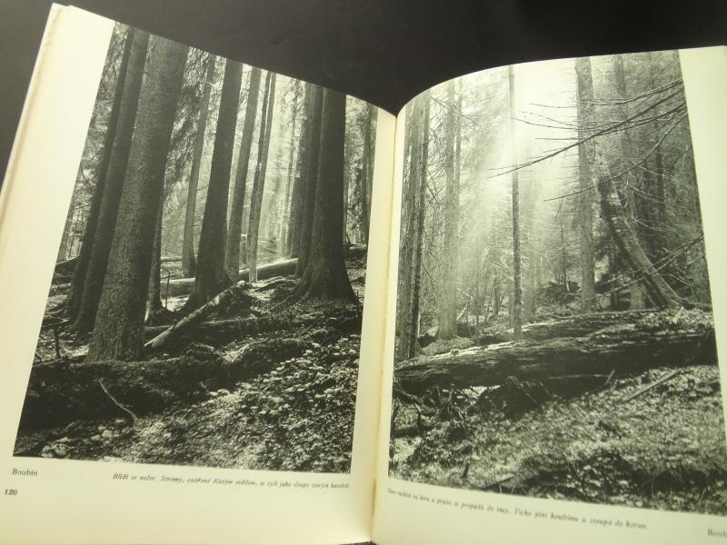 Nase pralesy (Naše pralesy)5