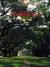 建築と都市 a+u 1989年9月臨時増刊号 可能性の住宅:アメリカ住居の3世紀