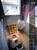 新建築住宅特集 第251号 2007年3月号 ホーム・エンターテイメント